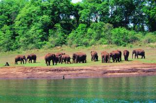 herd_of_elephants_50.jpg